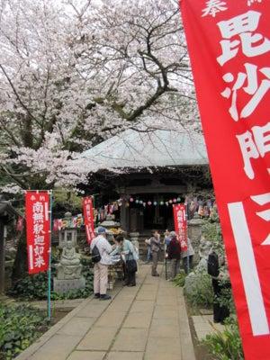 正覚院@村上で桜を眺める。